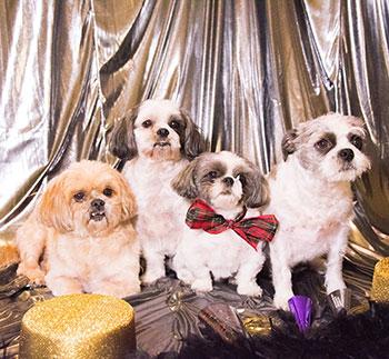 Stefani's Dogs